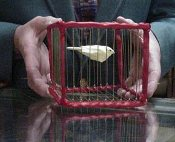 Vanishing Bird Cage Large